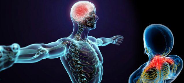 Механизм действия краниосакральной терапии