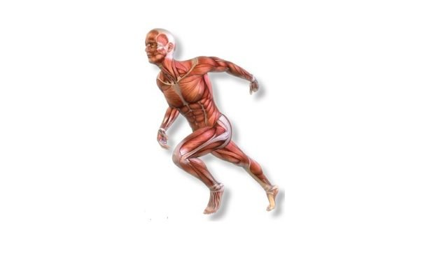 Фасции: 8 ключевых моментов при физических нагрузках