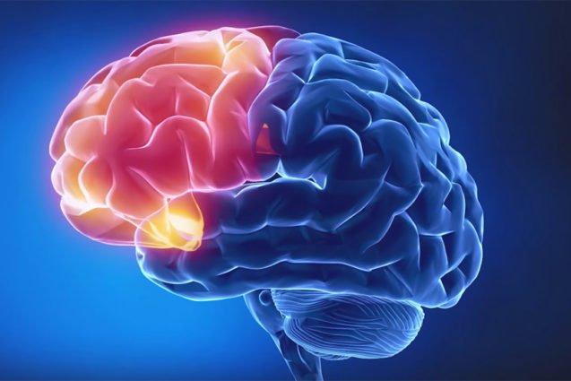 Семинар «Краниосакральная терапия. Мозговой череп»