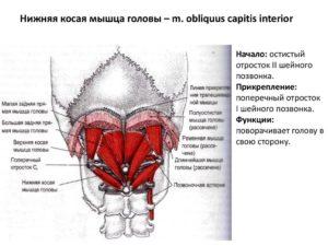 дисфункции позвонков шейного отдела