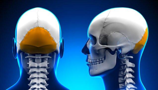 Затылочная кость – эмбриогенез, оссификация и классификация ядер окостенения, внутрикостное поражение