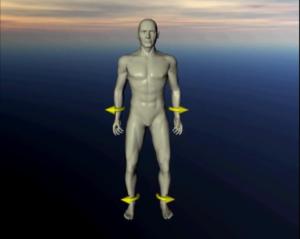 Краниосакральный ритм на модели человеческого тела