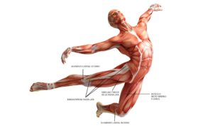 anatomia-fascia-lata-musculo-r