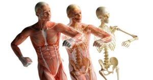 Введение в остеопатию. Миофасциальный баланс