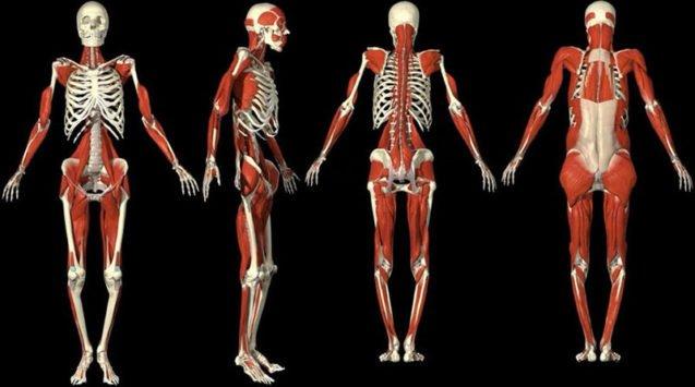 90% нарушений в скелетно-мышечной системе имеют висцеральный компонент