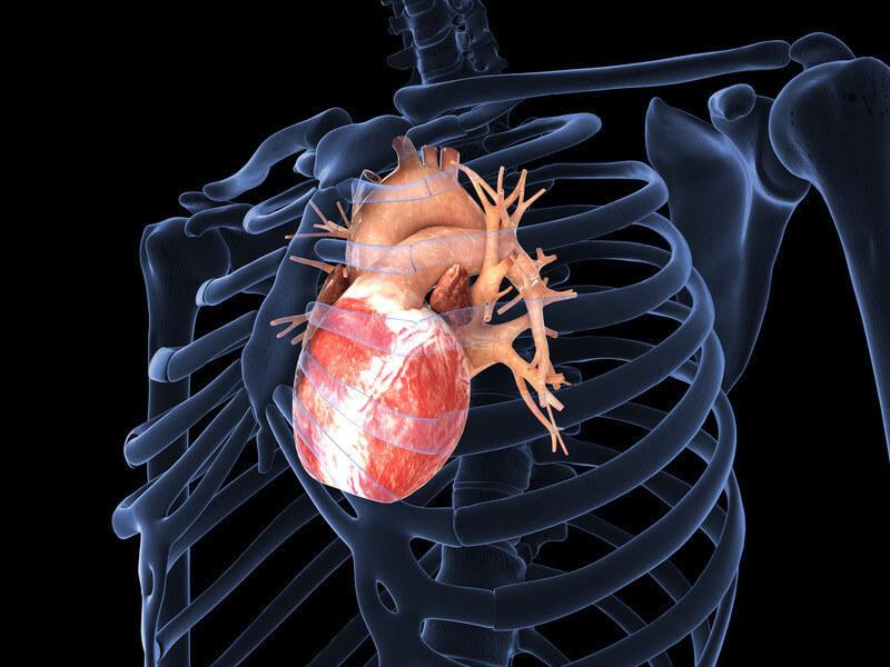 Сердце и скелетно-мышечные нарушения