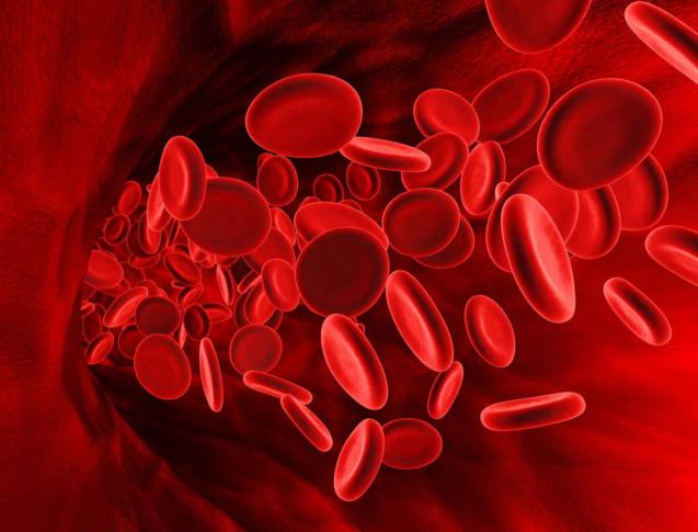 Болезни крови — ментальные, эмоциональные, психосоматические причины