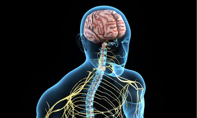 Вегетативная нервная система и ее роль в формировании функциональной патологии