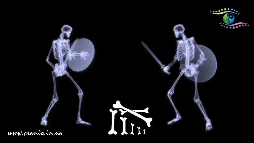 Различия краниосакральной терапии и черепной остеопатии