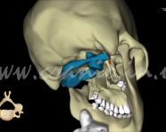 Атлант и челюсть: почему правка шеи помогает не всегда