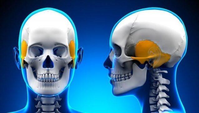 Скуловая кость, височная кость и колено
