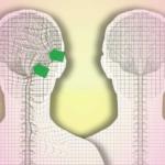 краниосакральная терапия, движение спинномозговой жидкости