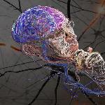 тканевая память