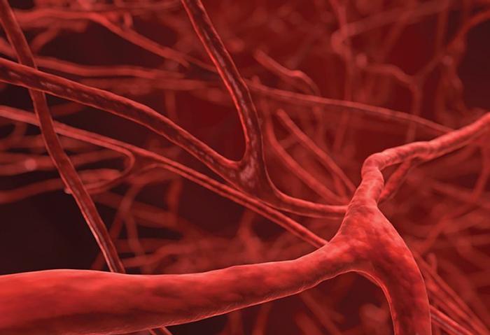 Капилляры лимфатической системы