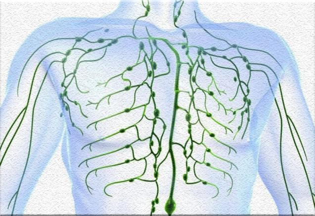 Лимфатическая система в остеопатической концепции: представления, исследования, теория и практика.