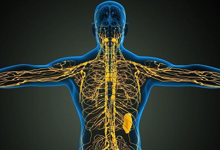 Лимфатические каналы