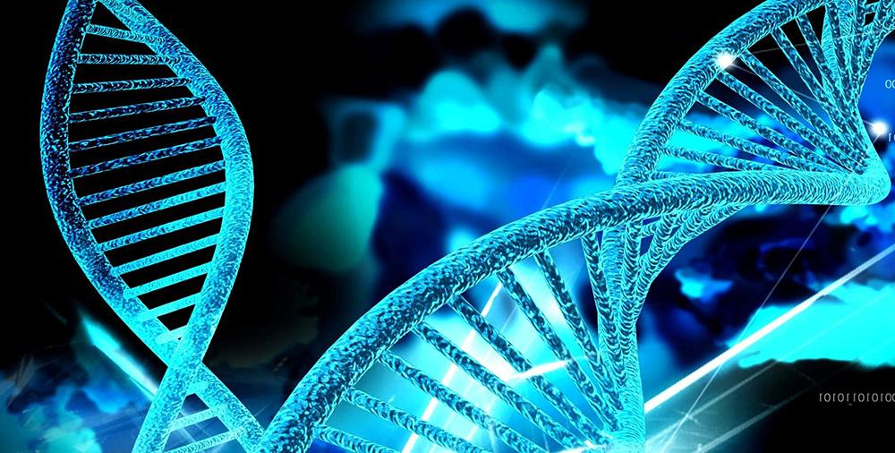 краниосакральная биодинамика-средний прилив