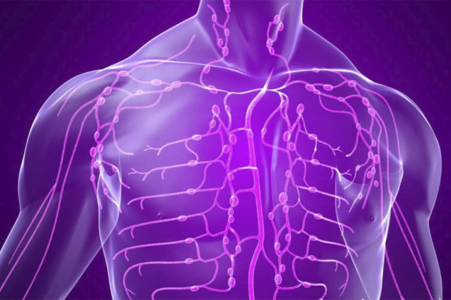 Лимфатическая система в остеопатической концепции: представления, исследования, теория и практика. Часть II