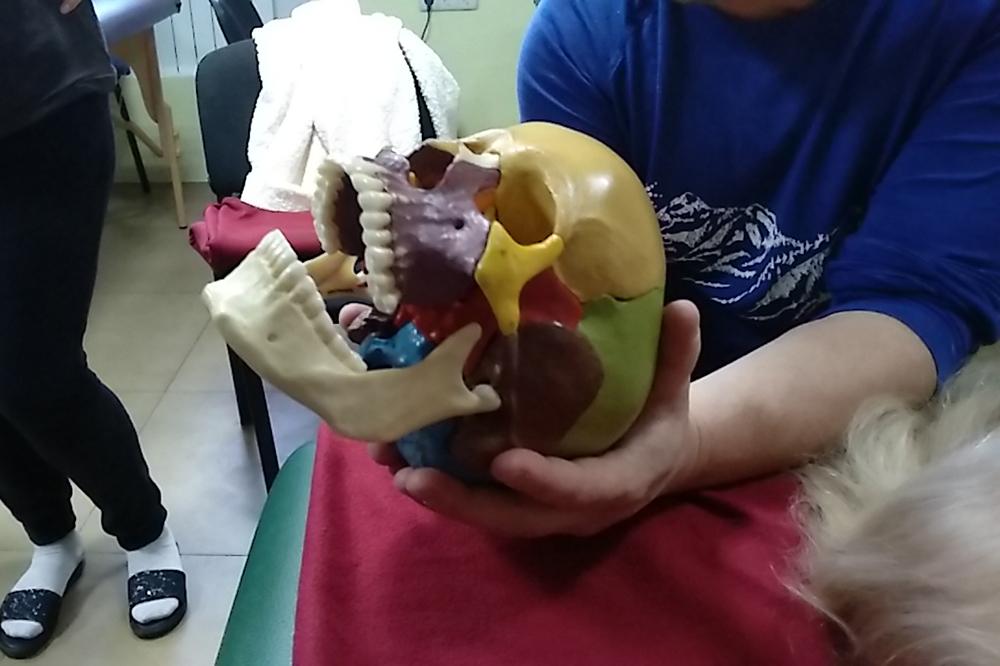 коррекция височно-нижнечелюстного сустава в школе остеопатии Мир Человека
