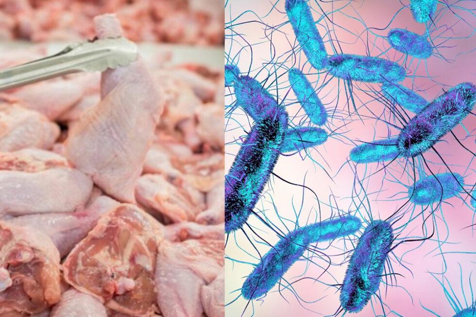 Инфекционные заболевания, передающиеся человеку через продукты питания