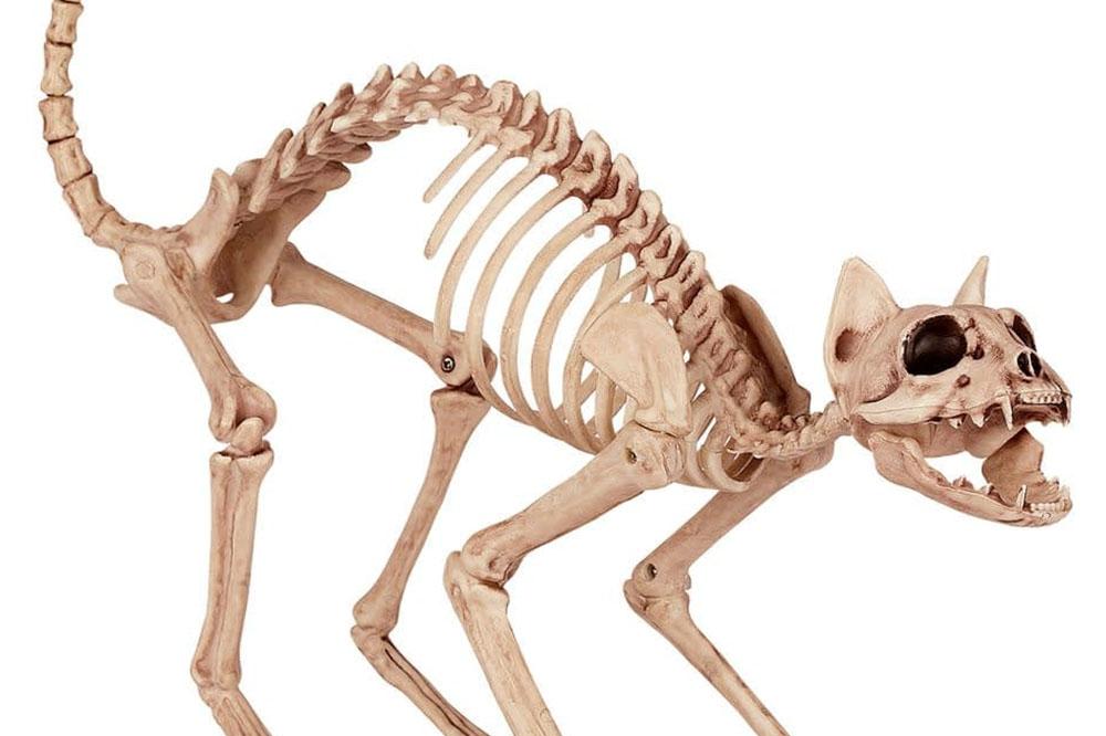 остеопатия и кости
